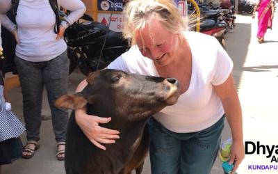 Adoptez une vache et vivez en paix